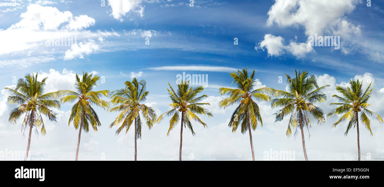 Panoramic view of palms and cloudscape, summer background. - Stock Image