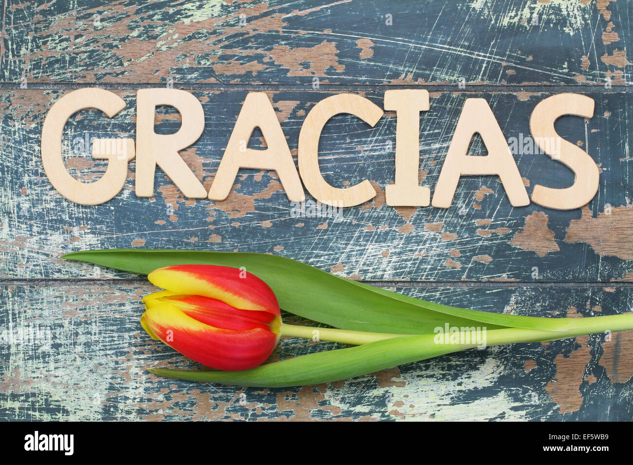 Image result for thank you for a great year in spanish