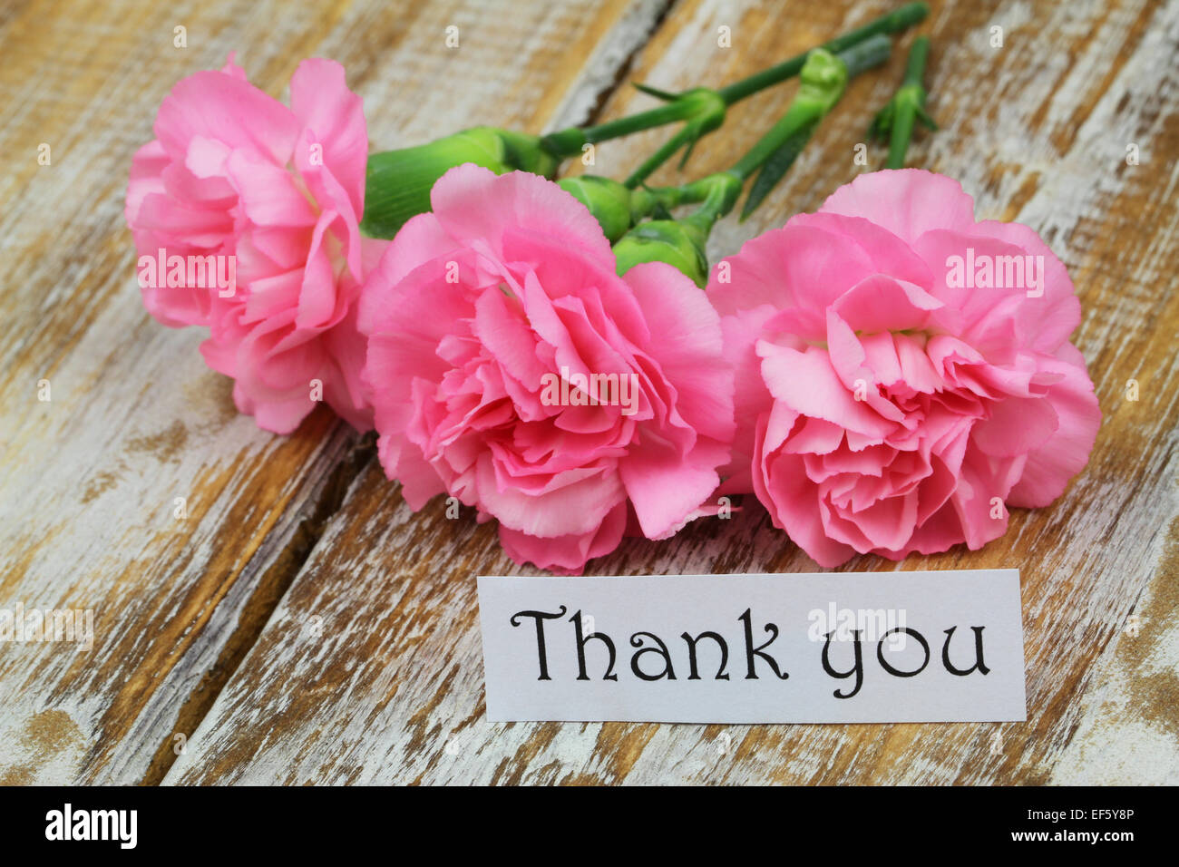 Thank you card with pink carnations on rustic wooden surface stock thank you card with pink carnations on rustic wooden surface izmirmasajfo