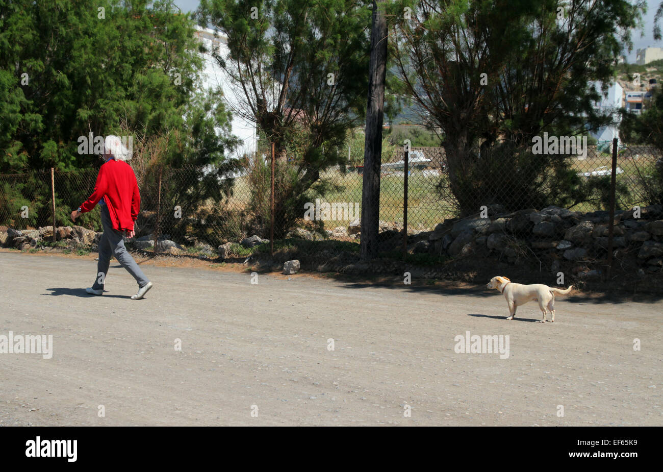 CREAM COLOURED DOG WATCHES MAN WALKING IN RED CARDIGAN MOCHLOS CRETE GREECE 06 May 2014 - Stock Image