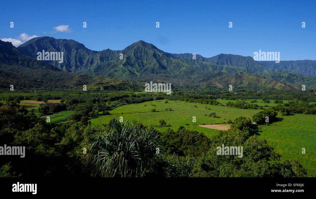 Taro Field, Hanalei Valley, lookout, Kauai, Hawaii - Stock Image