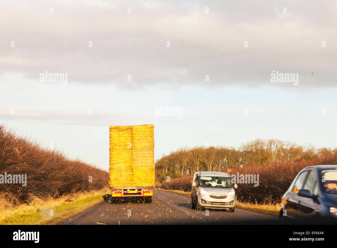 truck lorry carrying straw bails leaving trail of hay behind shedding load distraction distracting driving dangerous - Stock Image
