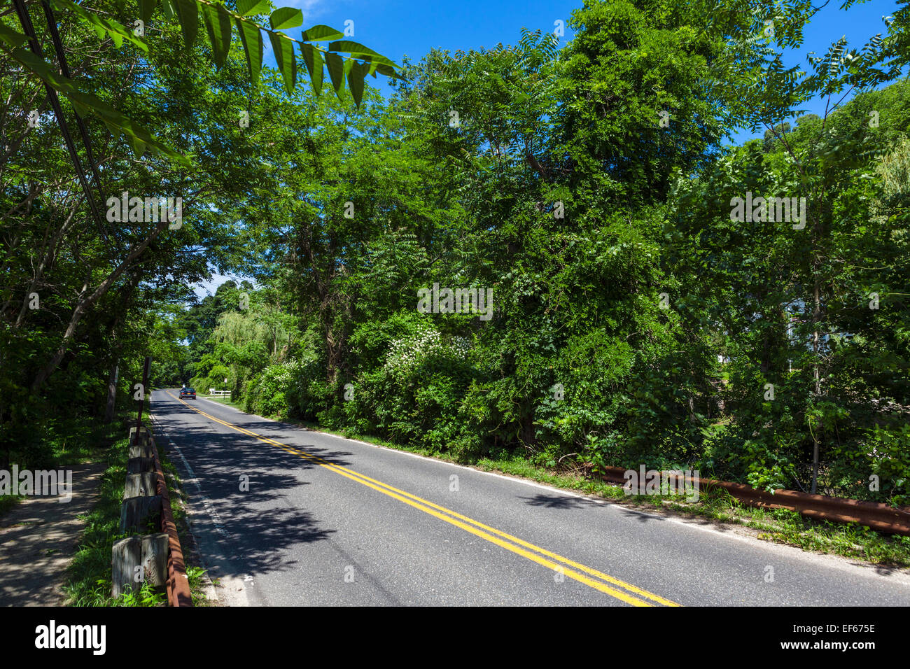 Country road in Cold Spring Harbor, Huntington, Suffolk County, Long Island , NY, USA - Stock Image