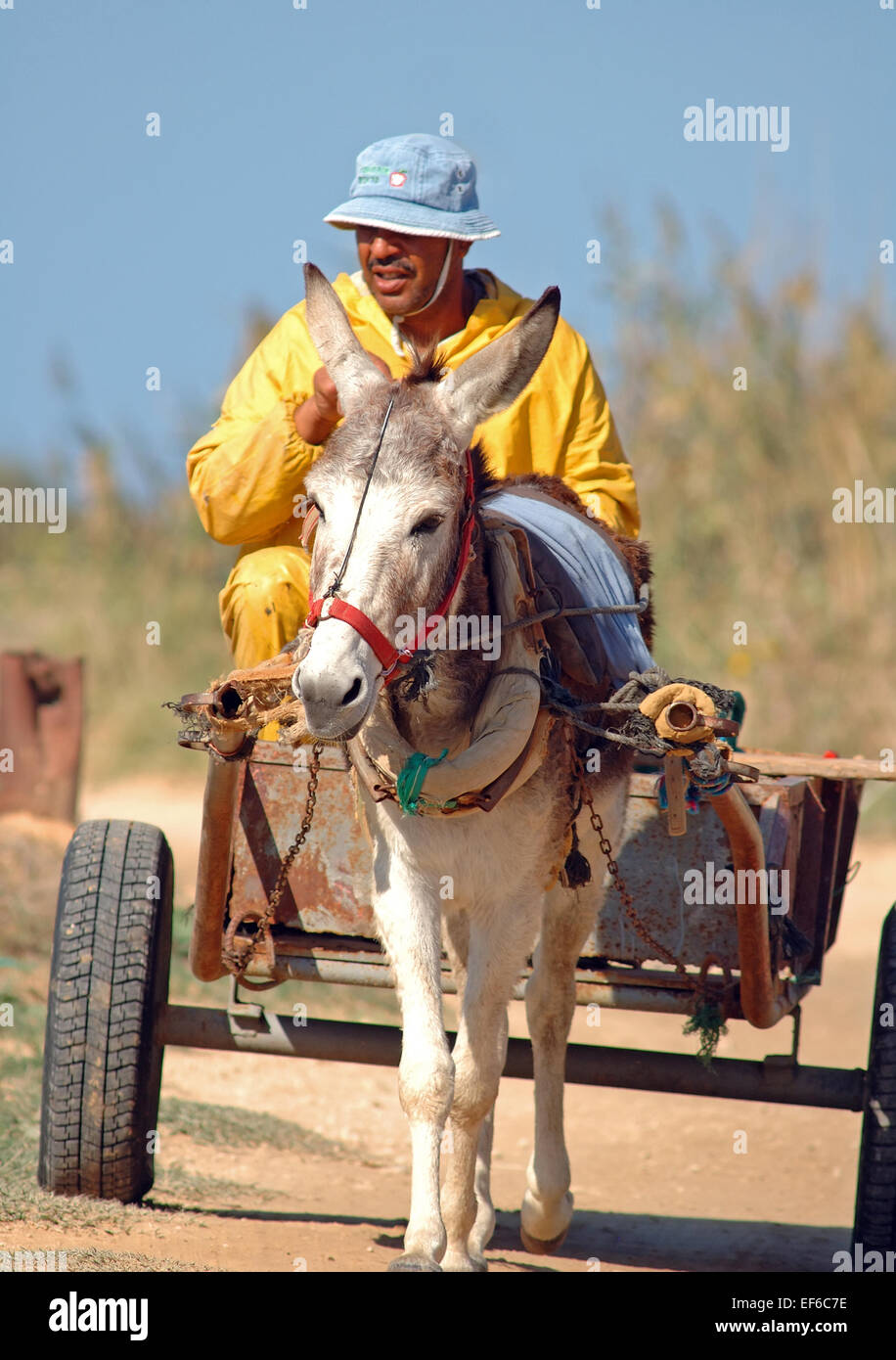 Donkey with carriage, - Stock Image