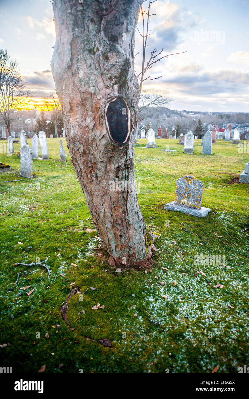 A tree grows in a cemetery Stock Photo