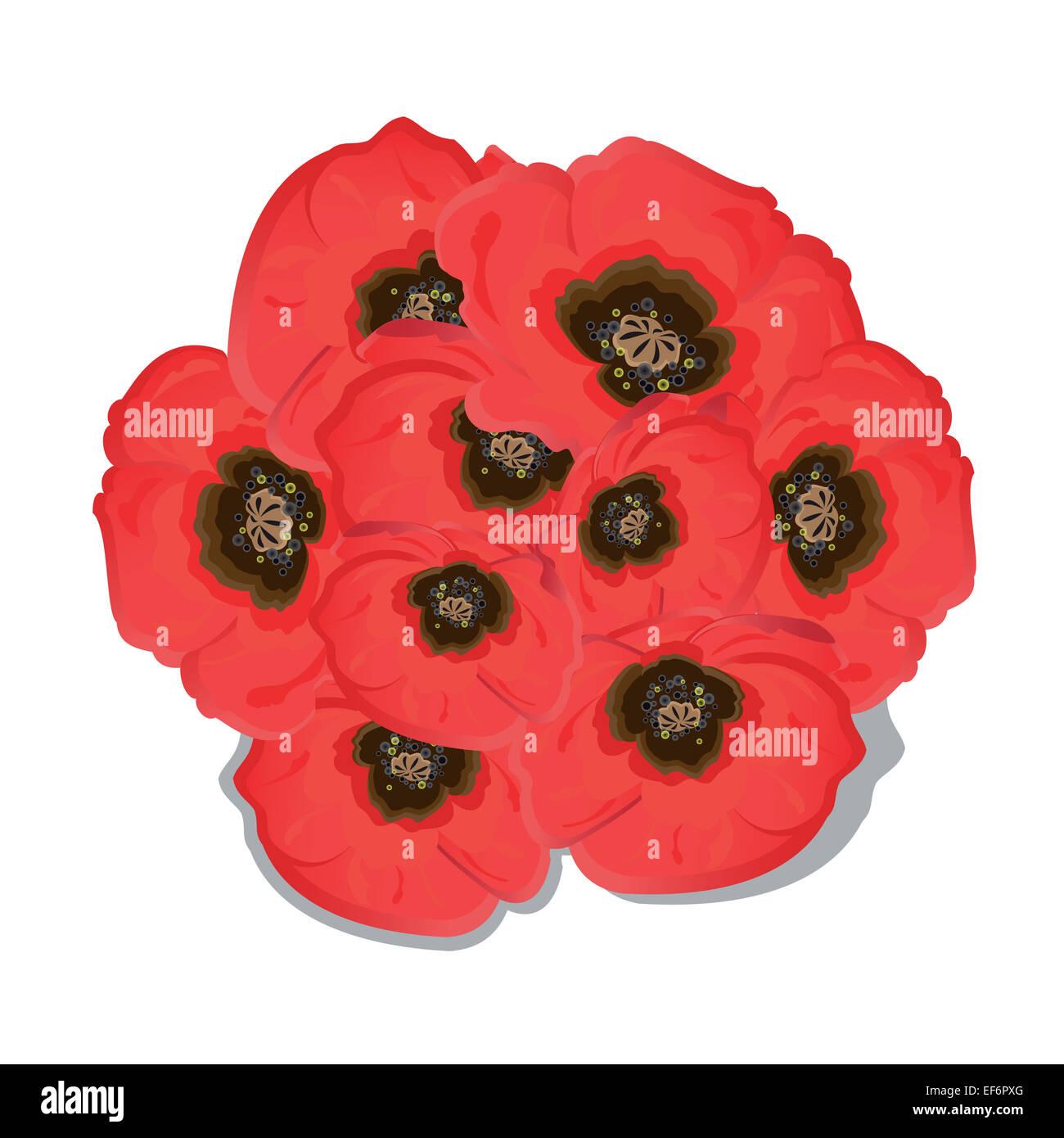 Poppy flowers on white background. Vector illustration. - Stock Image