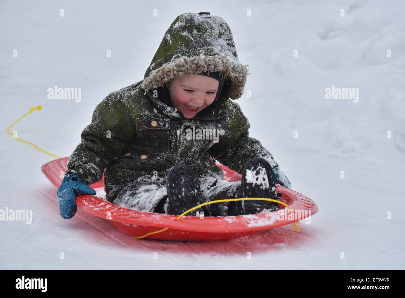 A young boy (2 1/2 yrs) laughing while sledging - Stock Image