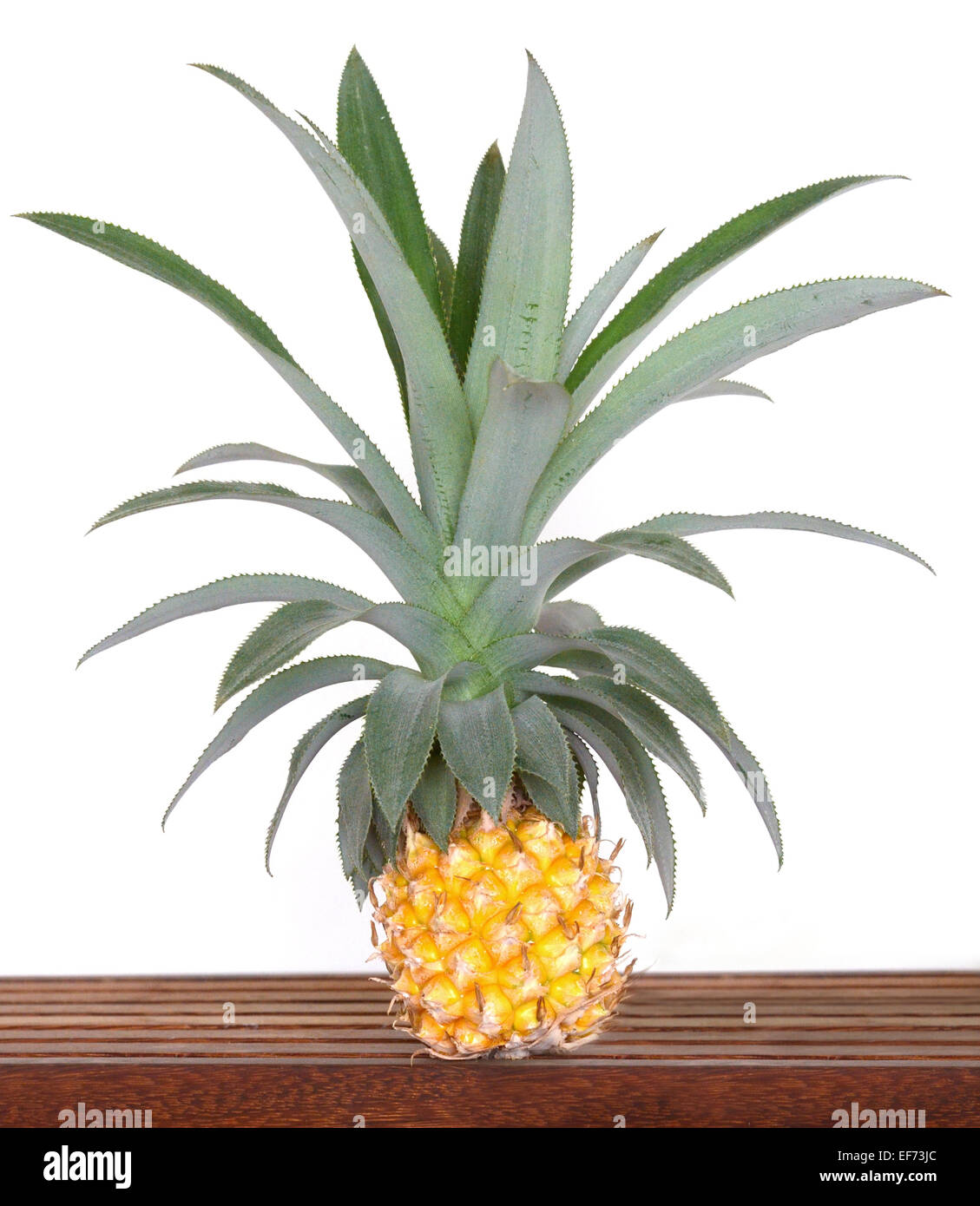 Small pineapple from Reunion island (labeled Victoria) - Stock Image
