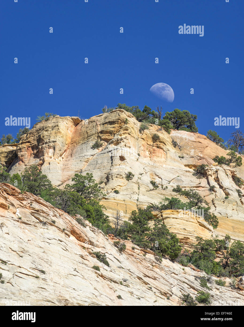 Moon rising at Checkerboard Mesa, Navajo sandstone, Zion National Park, Springdale, Utah, United States - Stock Image
