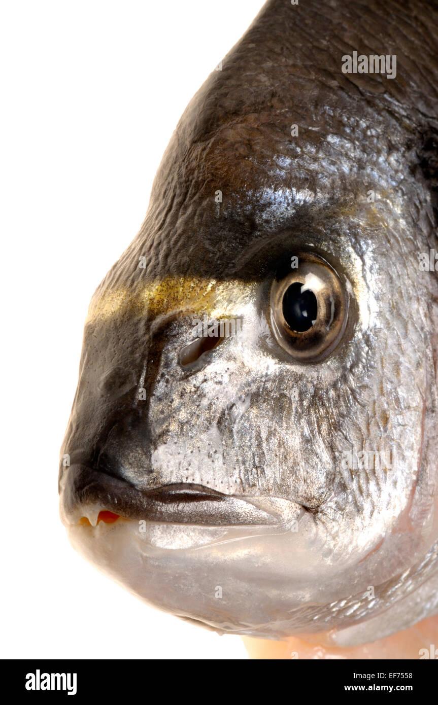 Whole fresh Gilthead sea bream from a supermarket - head Stock Photo