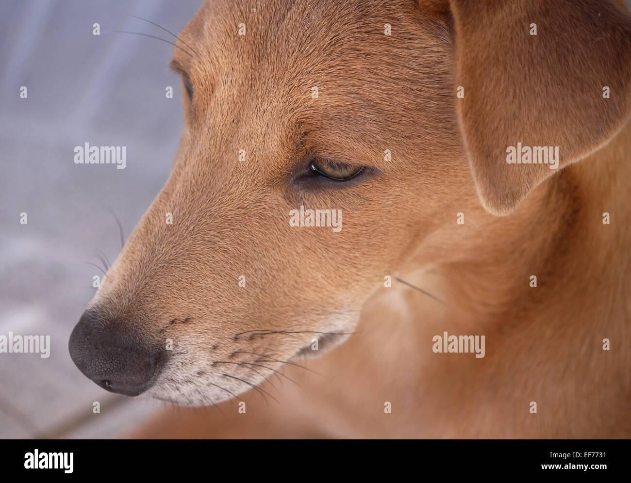 Headshot of a dog Stock Photo