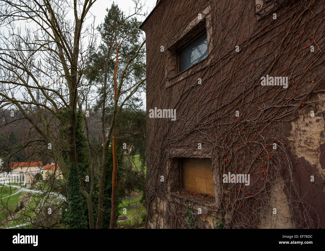 House wall covered by dead brown ivy vines. - Stock Image