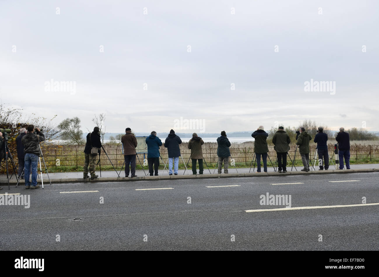 Twitchers at Chew Valley Lakes - Stock Image
