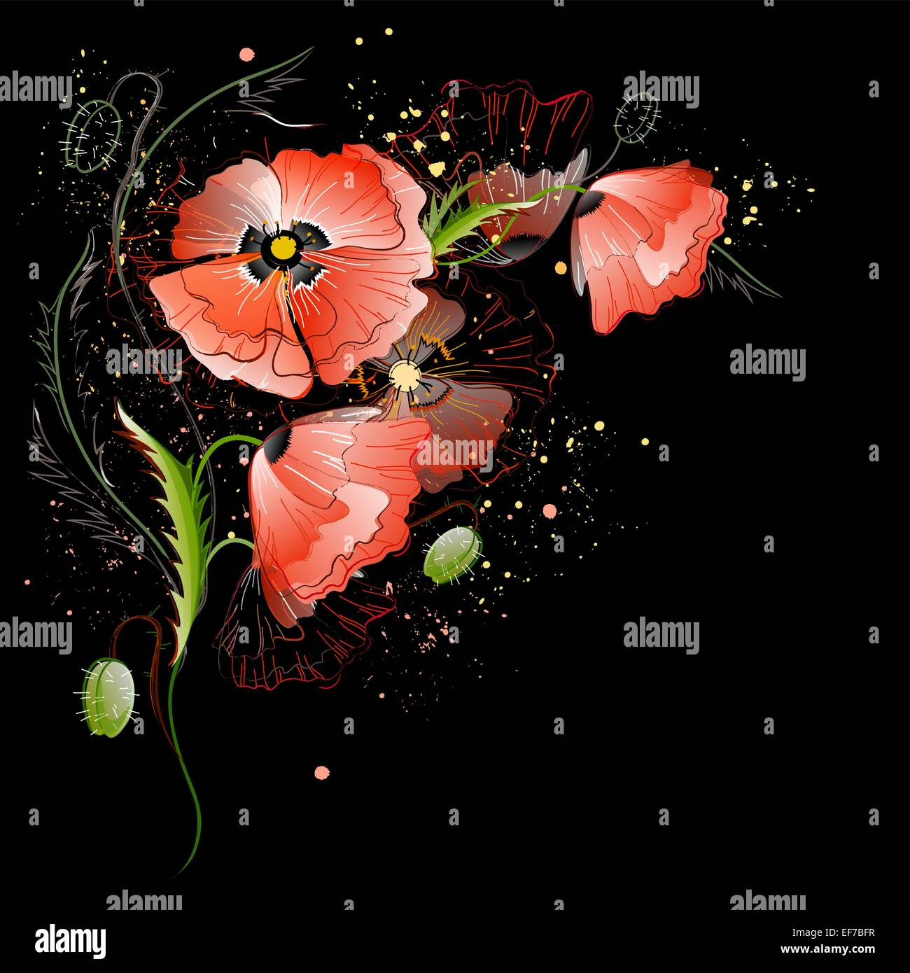 Vector black greeting card with red gentle poppy flowers - Stock Vector