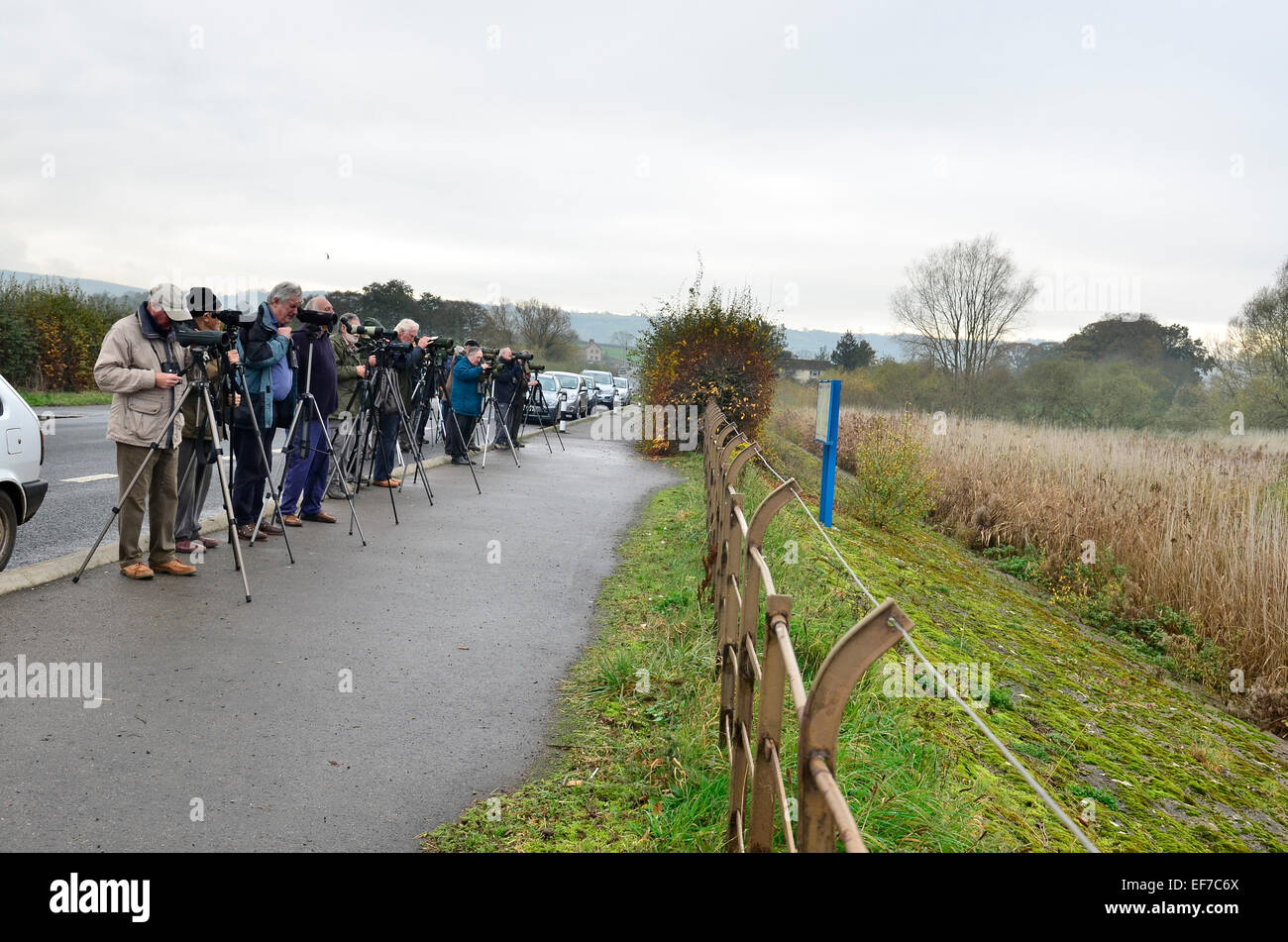 Twitchers at Chew Valley Lakes in the UK Somerset. - Stock Image