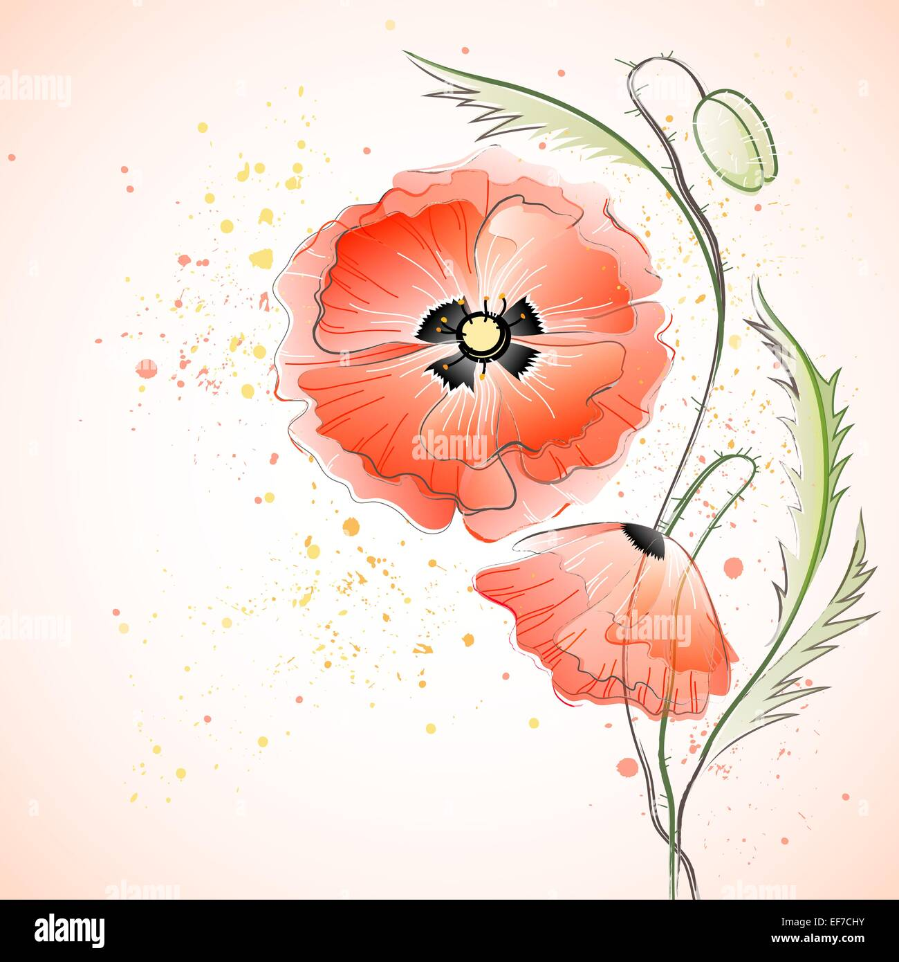 Vector greeting card with red gentle poppy flowers - Stock Vector