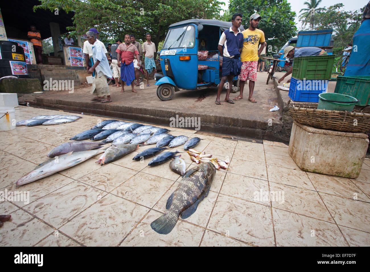FISH MARKET AND LOCAL SRI LANKAN MEN - Stock Image