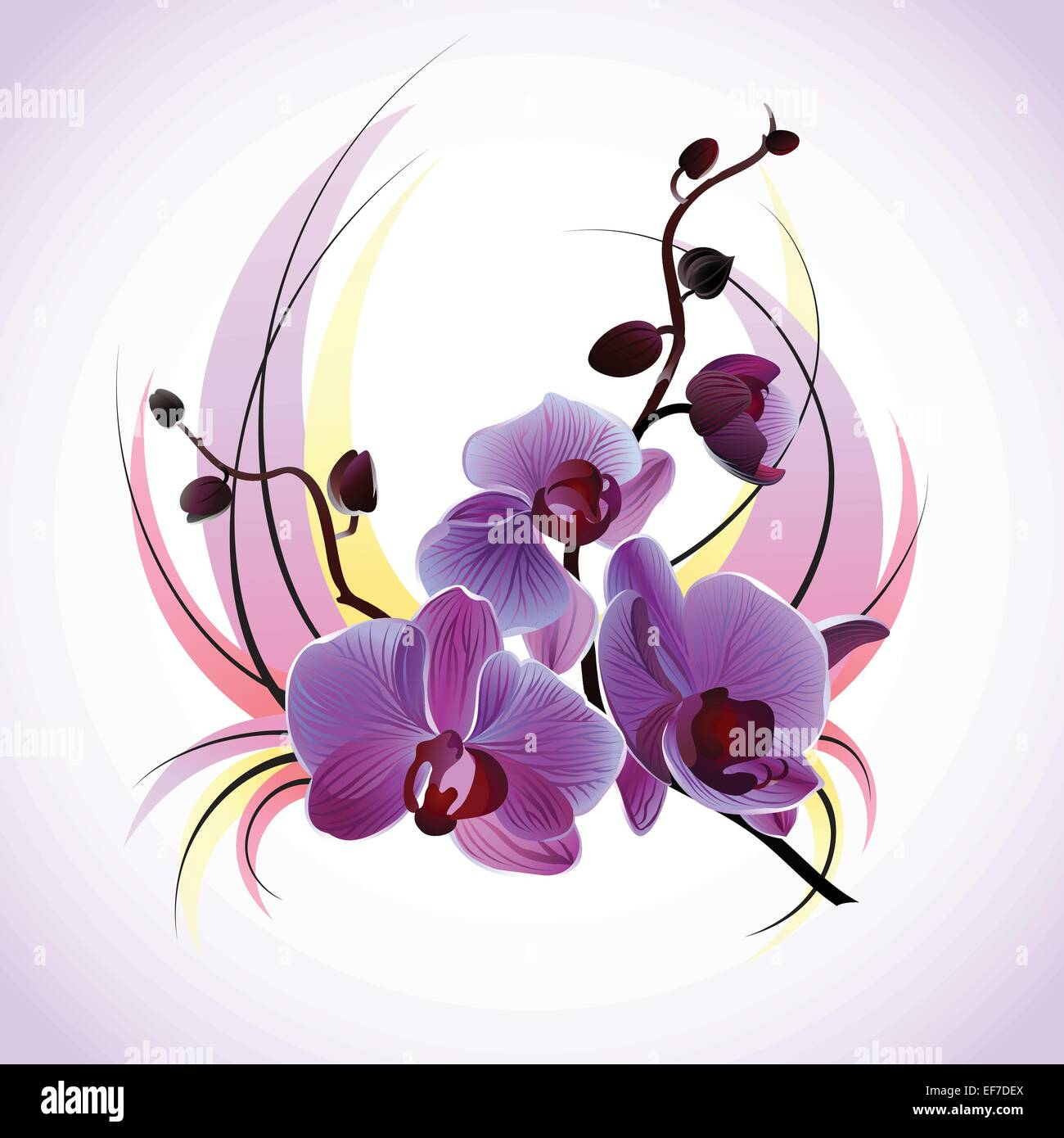 Vector greeting card with violet gentle orchids - Stock Vector