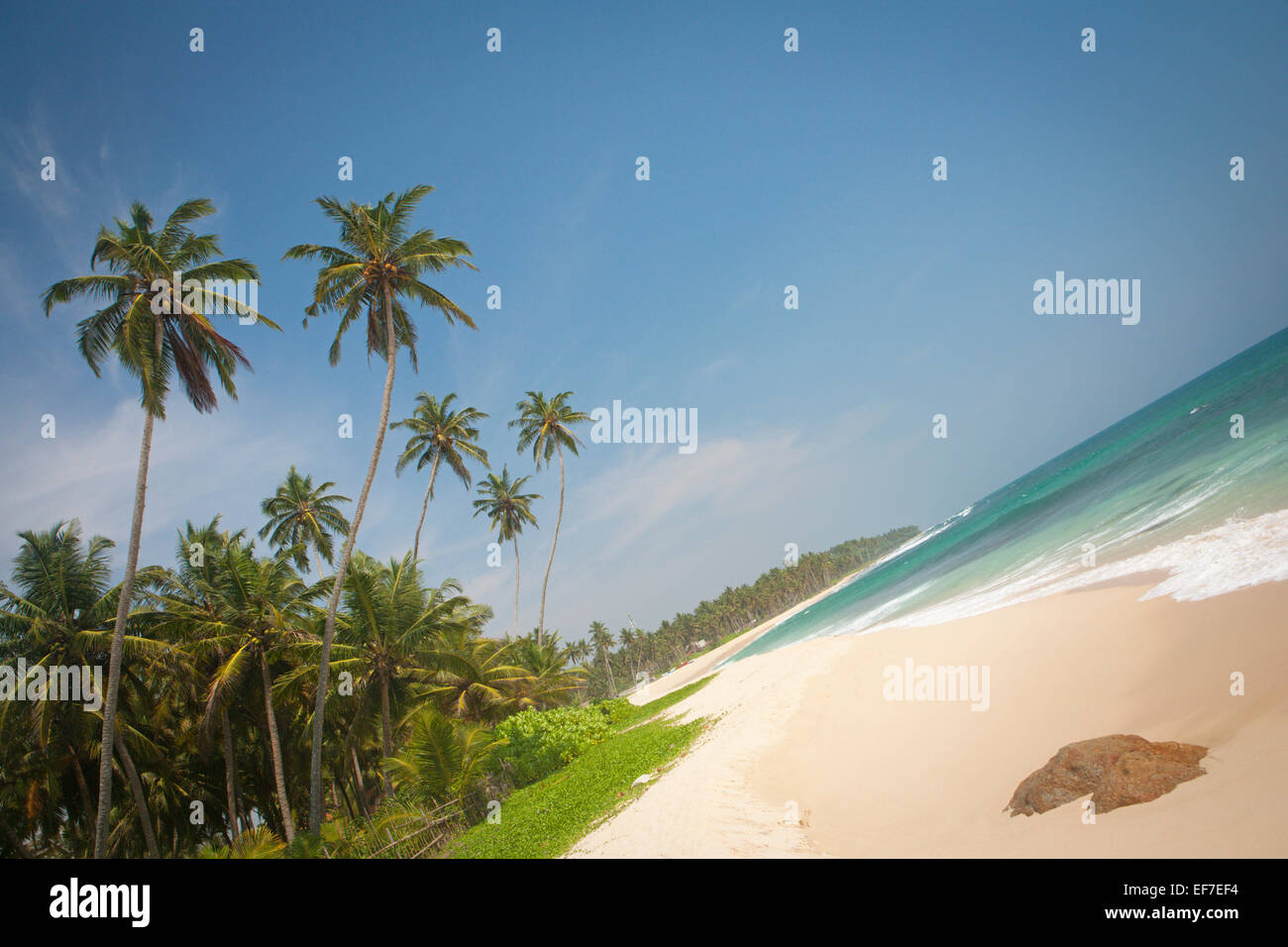DESERTED BEACH WITH PALM TREES - Stock Image