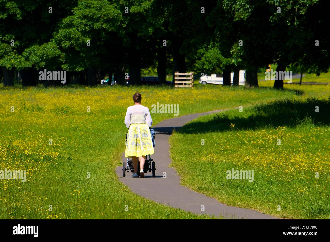 Woman pushing a pram on a footpath through a grass field with buttercups in a park. - Stock Image