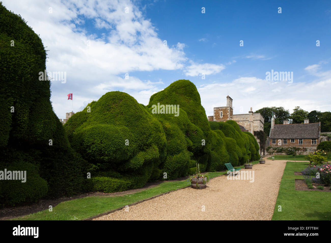 Famous double-yew hedge known as the 'Elephant' hedge in the gardens of Rockingham Castle near Corby, Northamptonshire, Stock Photo