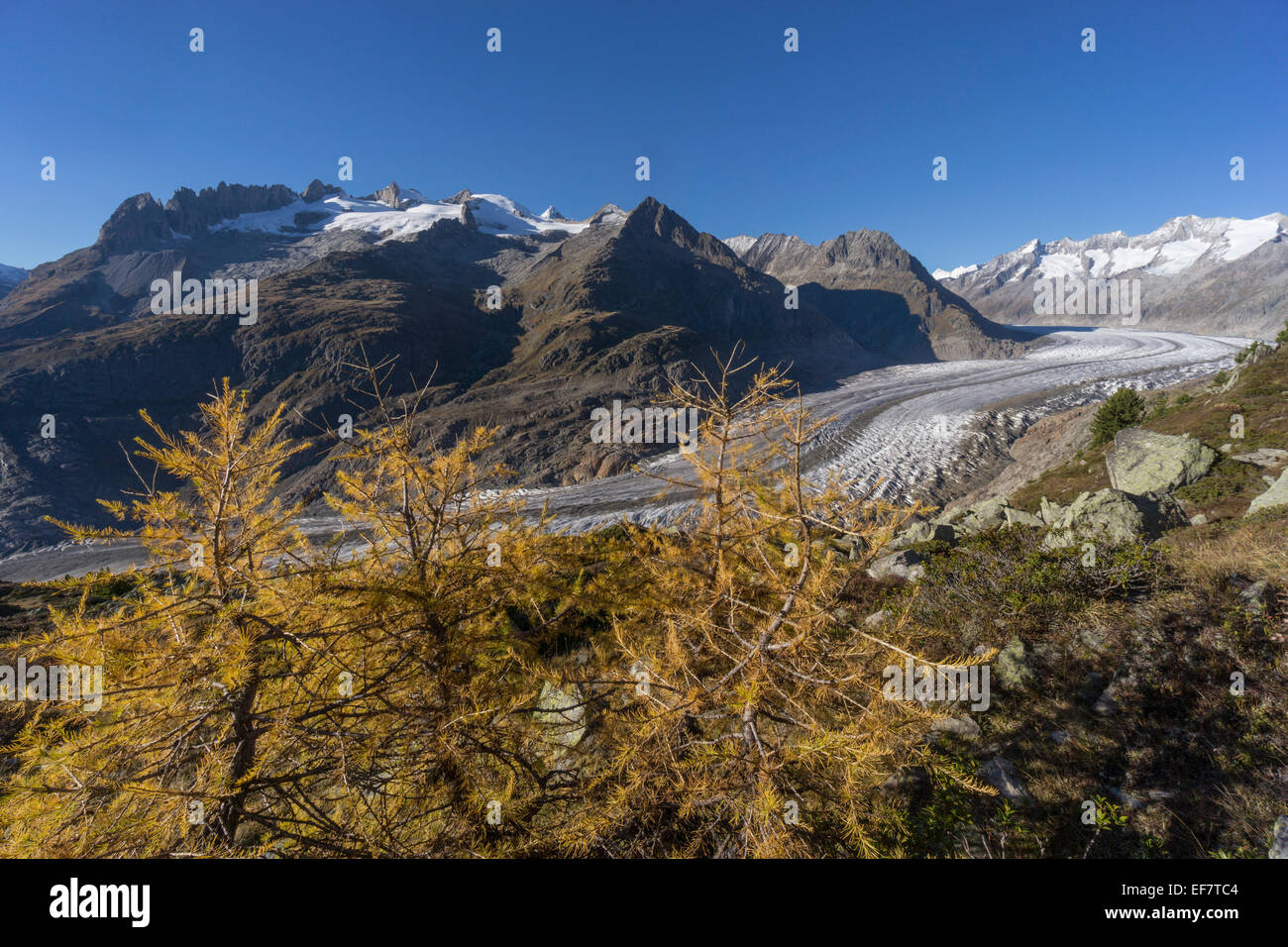 Panorama of the Aletsch Glacier in Autumn, Melting Glacier, Swiss Alps, Switzerland - Stock Image