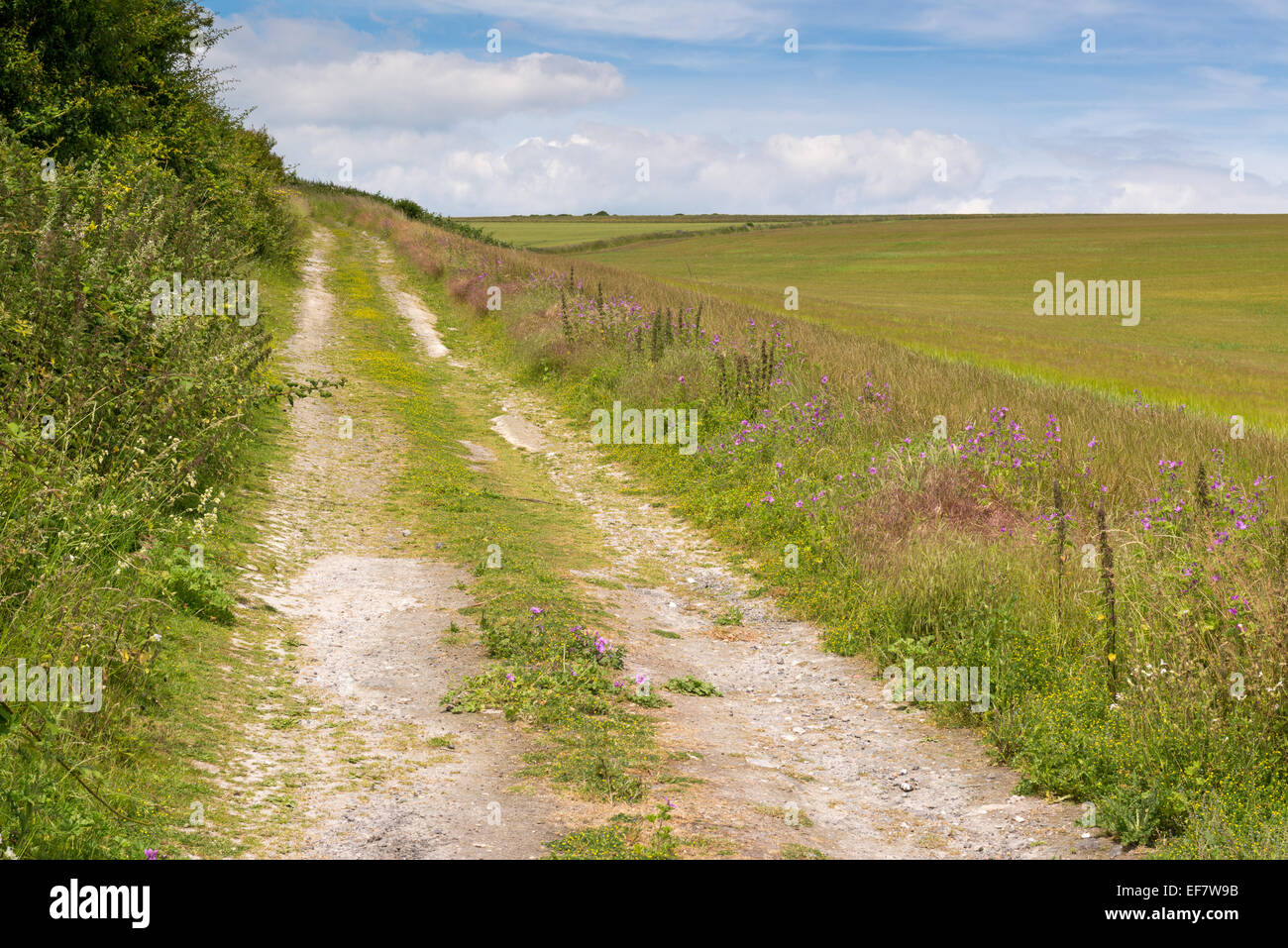 Farm track beside a field of wheat, with wild flowers - Stock Image