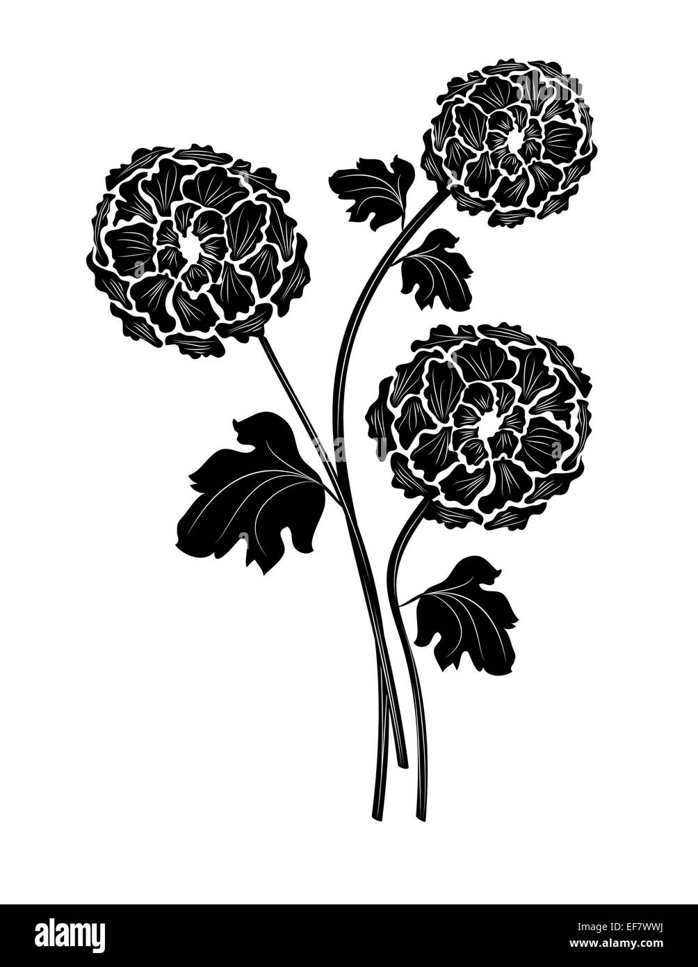 Lovely black and white illustration of three beautiful flowers with stems and leaves for decorative purposes and - Stock Image