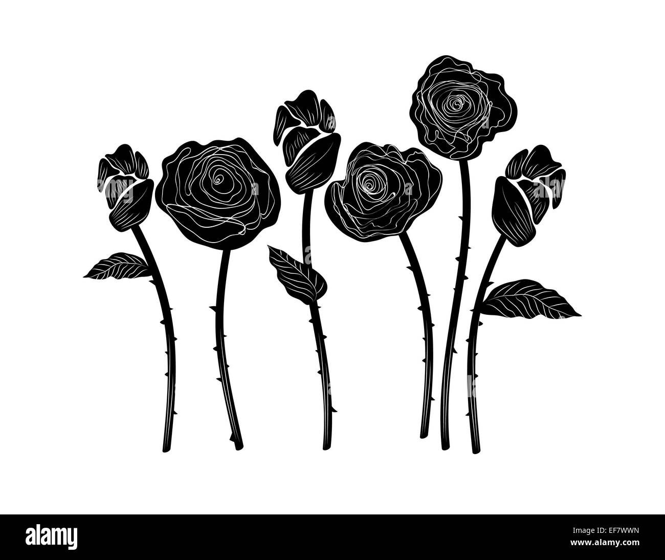 Elegant black and white illustration of six beautiful roses with leaves, stems and thorns for decorative purposes - Stock Image