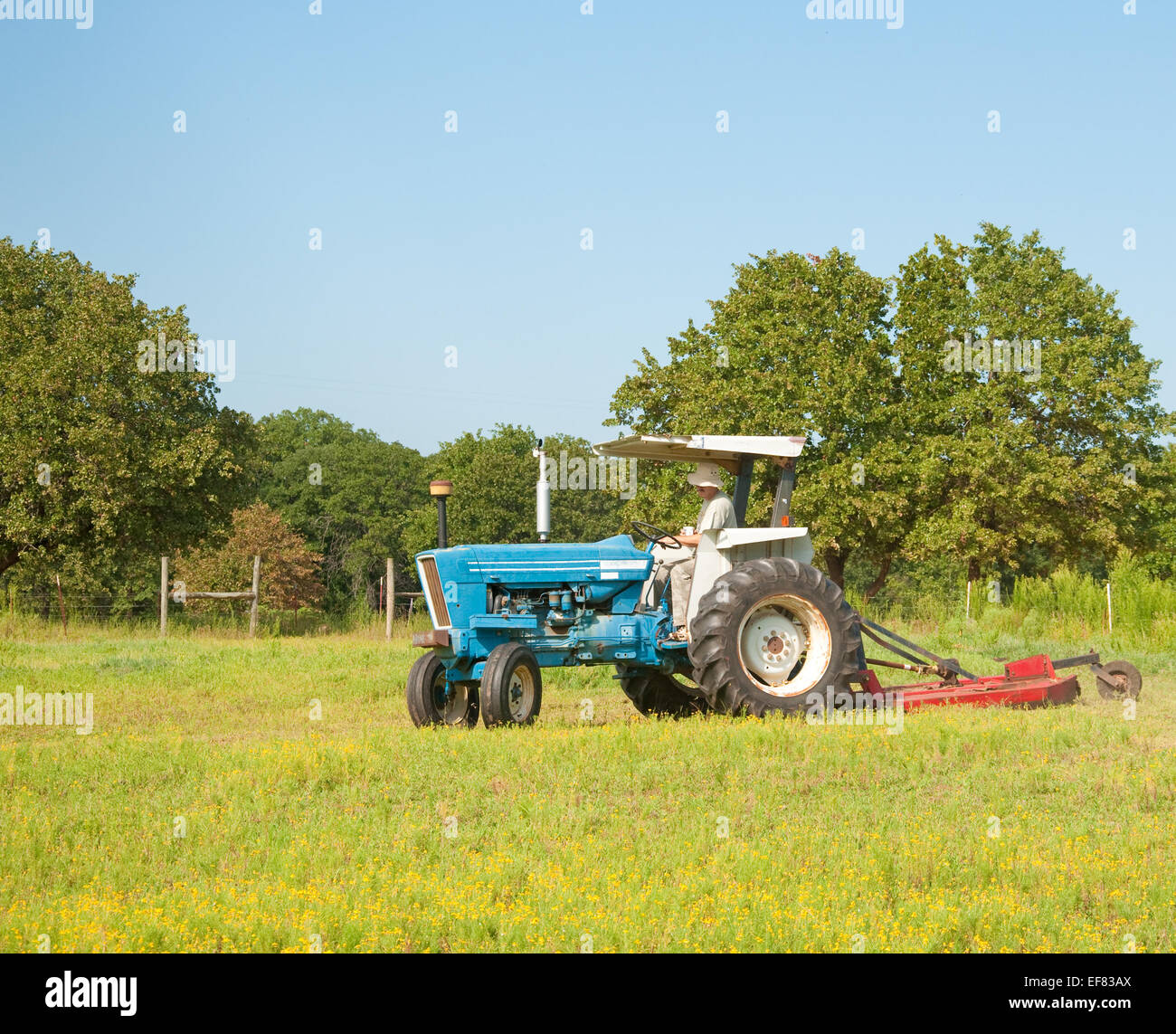 Cutting weeds in the pasture with a tractor and a bush hog