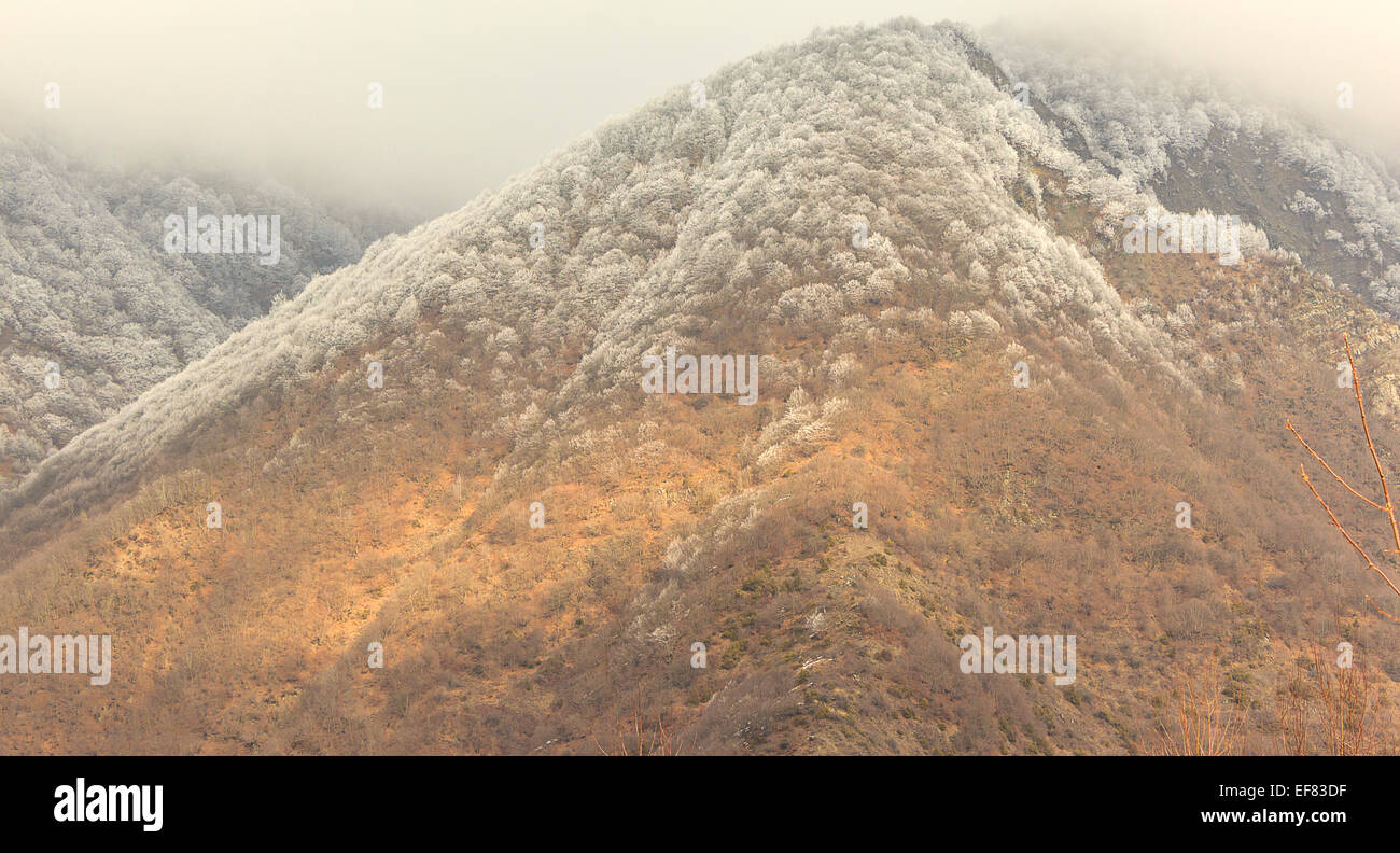 Frost on the trees in the mountains Qax Azerbaijan - Stock Image