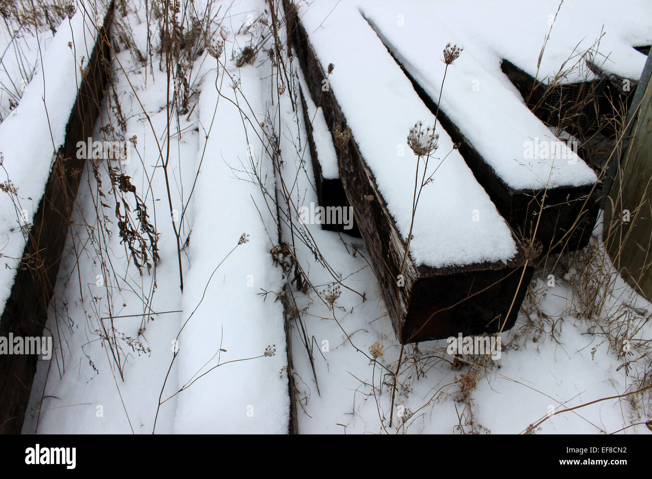 Hidden under the snow and sleepers abandoned the tracks of a train, a secret garden resists as every cold winter Stock Photo