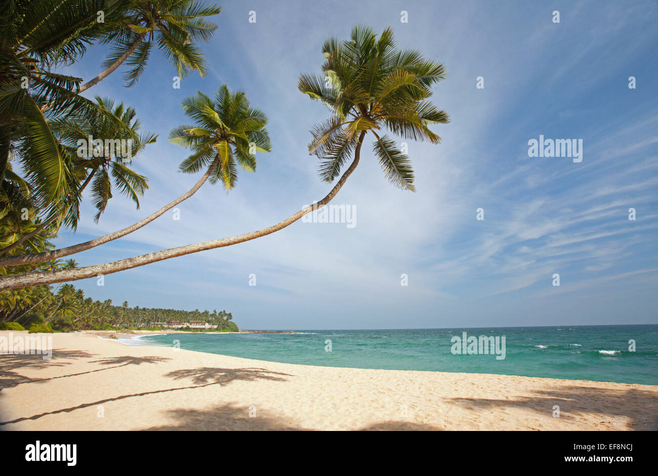 DESERTED BEACH IN TANGALLA WITH PALM TREES - Stock Image