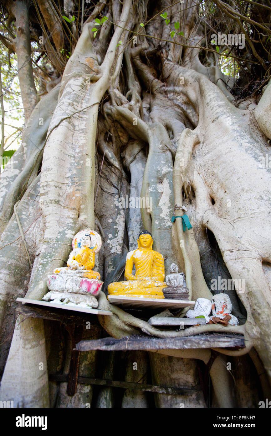 BUDDHIST SHRINE ON TREE AT ROADSIDE - Stock Image