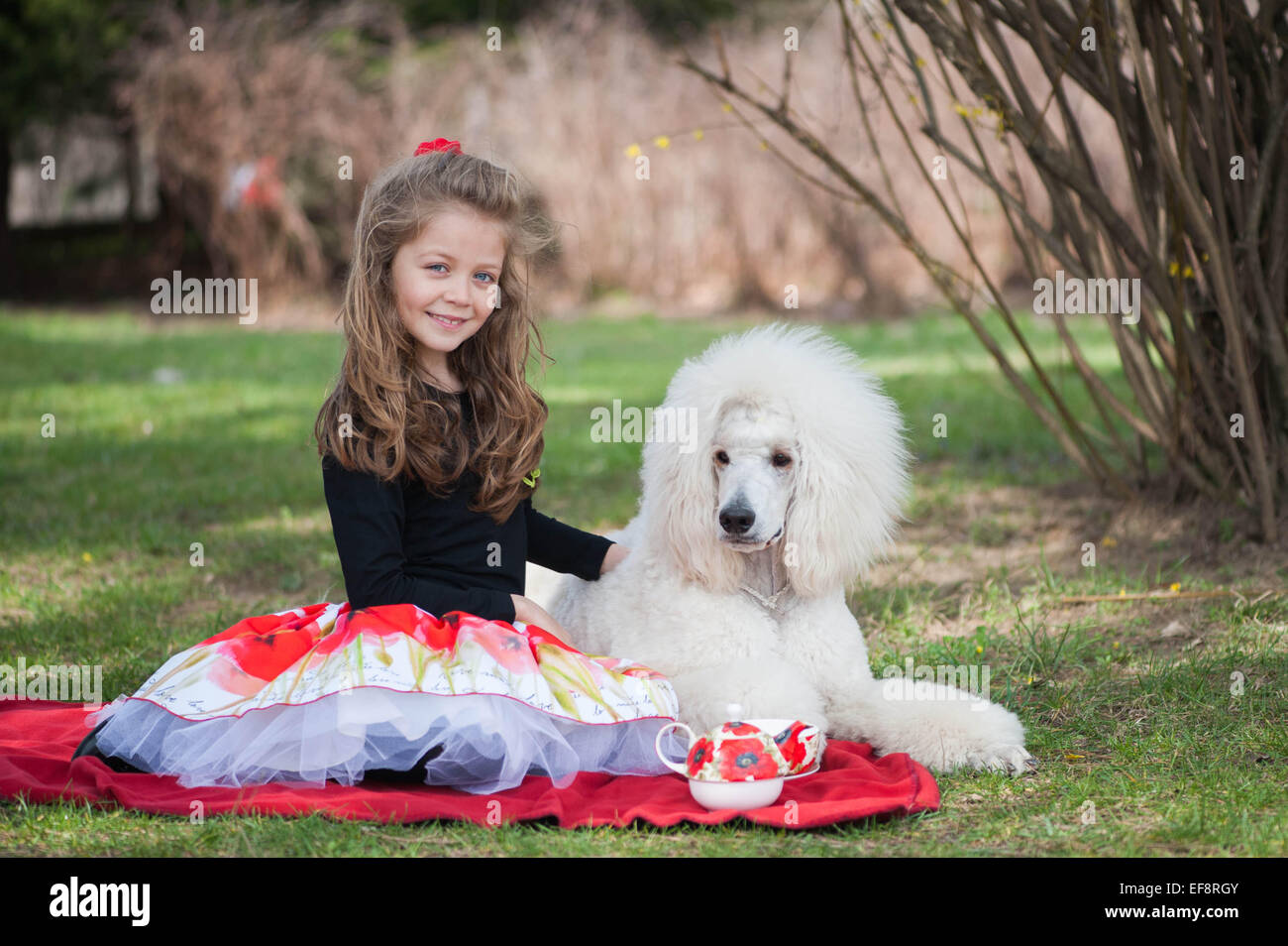 Portrait of girl (6-7) and white poodle on picnic blanket Stock Photo