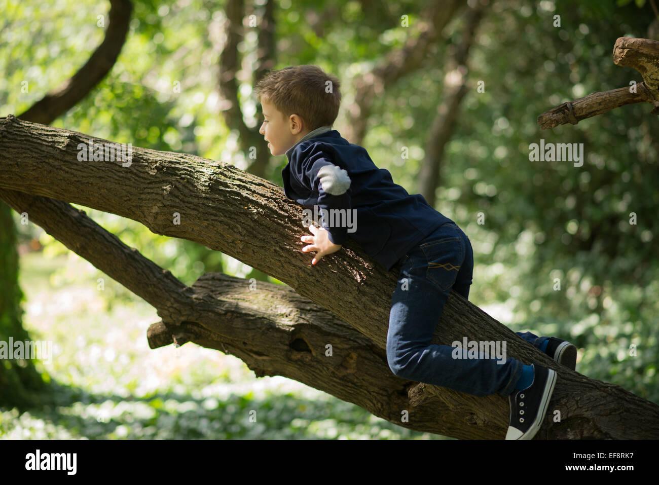 Boy climbing a tree - Stock Image