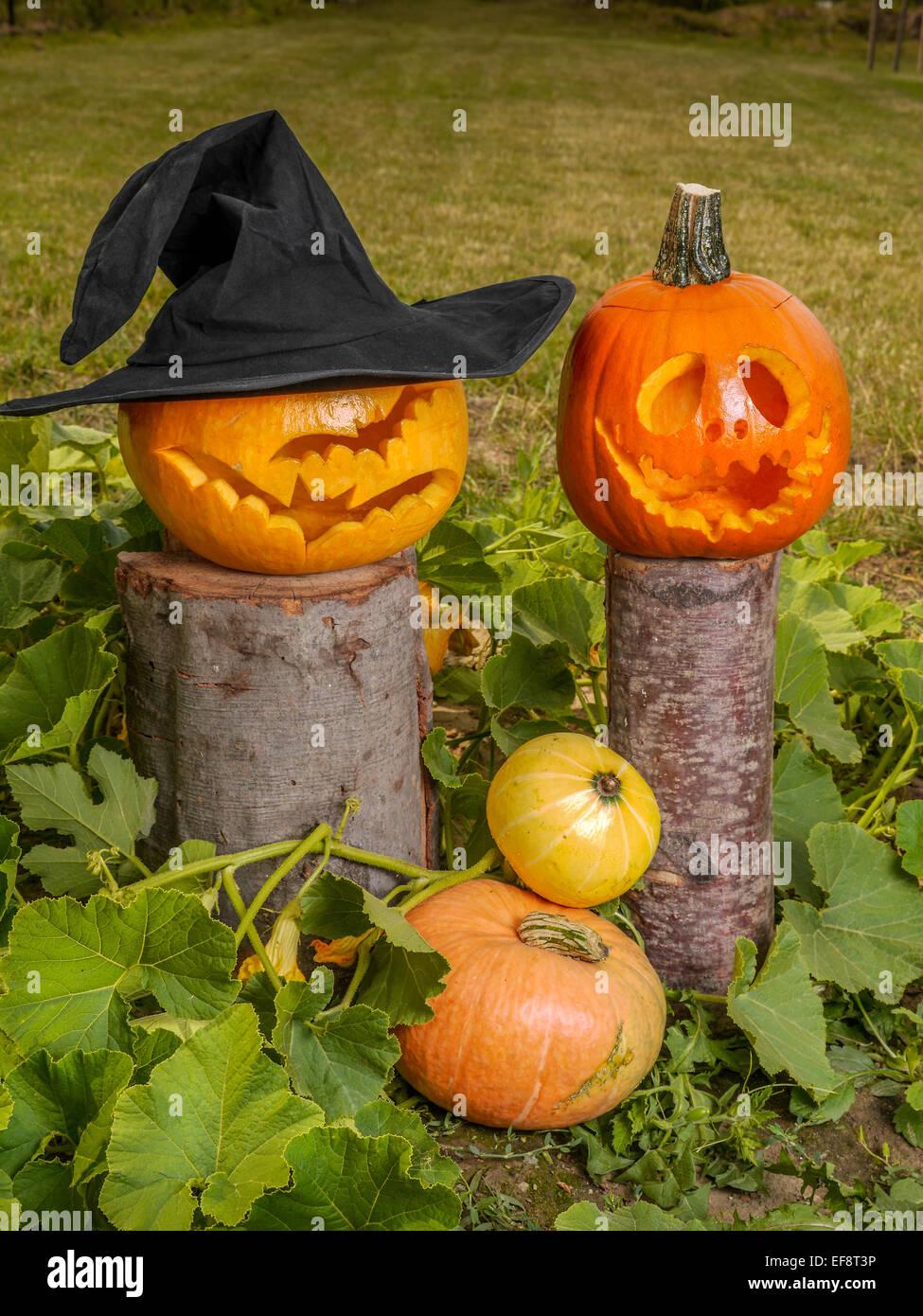 Jack-o-lantern pumpkins in the garden - Stock Image