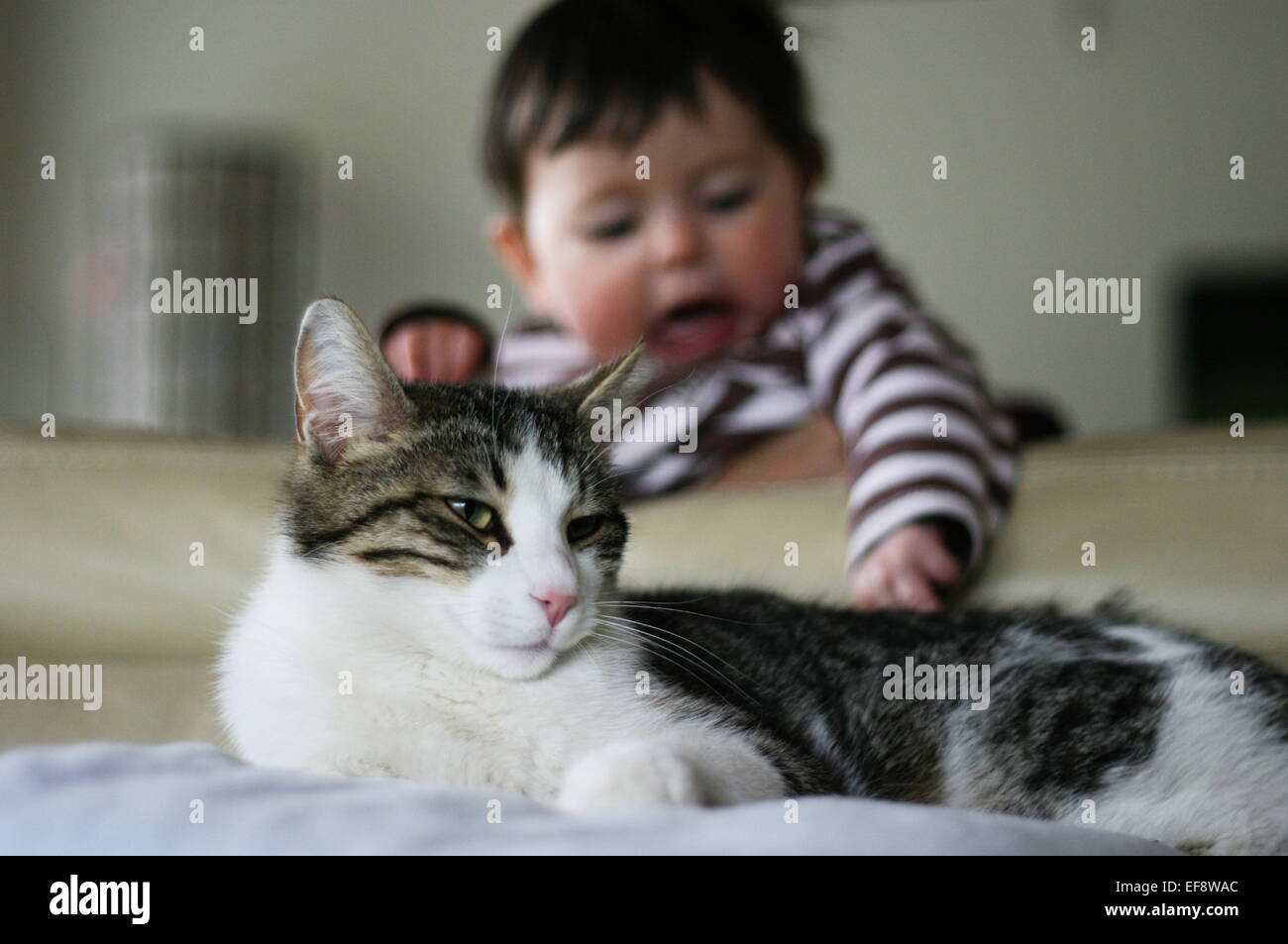 Baby (6-11 months) trying to catch cat tail - Stock Image