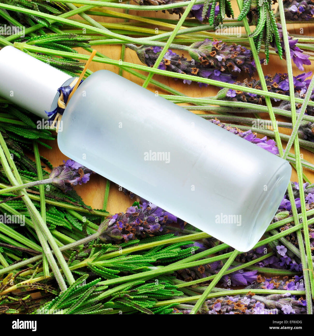 a bottle with fresh cologne and a pile of lavender flowers - Stock Image