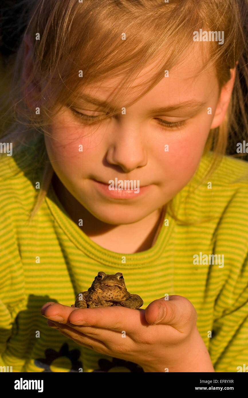 European common toad, toads, girl, child, children, Mädchen, Kind, Erdkröte, Kröte, Kröten, Hand, Bufo bufo Stock Photo