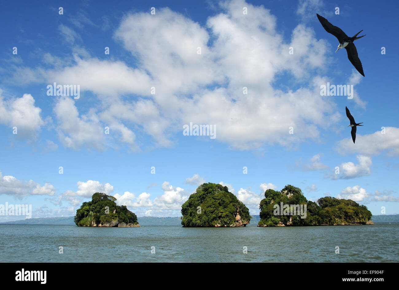 Exotic Dominican islands populated by birds - Stock Image