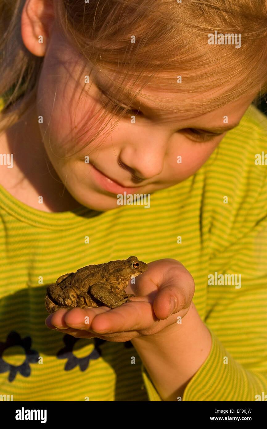 European common toad, toads, girl, child, children, Mädchen, Kind, Erdkröte, Kröte, Kröten, Hand, Bufo bufo Stock Photo