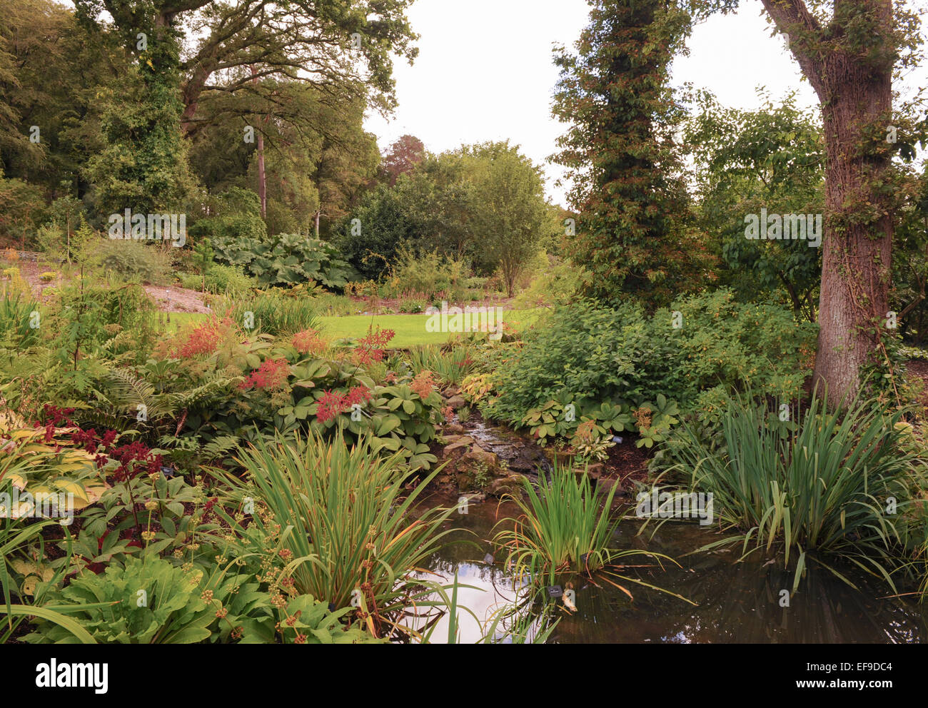 Bog Gardens at Rosemoor, Devon, England, UK Stock Photo: 78269412 ...