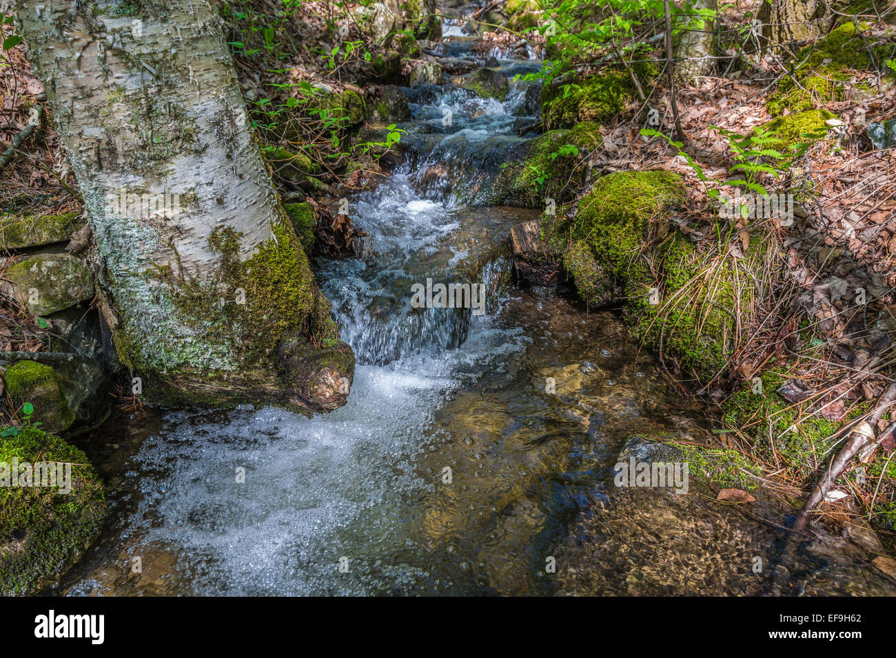 A fast flowing stream from mountain runoff near Sleeping Beauty Mountain in the Adirondacks. - Stock Image