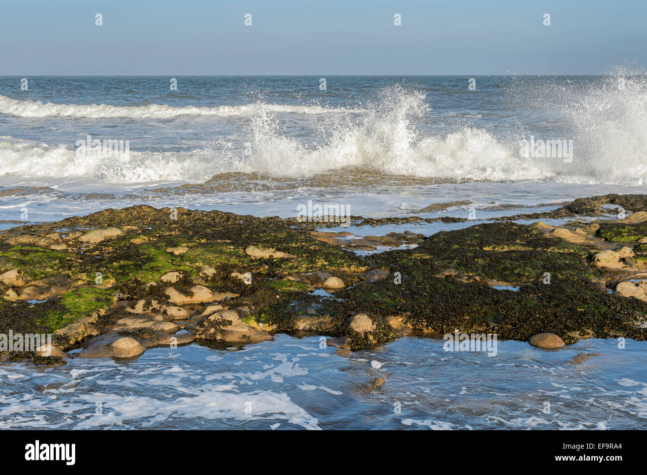 Waves crash on to a rocky beach at Filey, Northern England. Horizontal format with copy space. - Stock Image