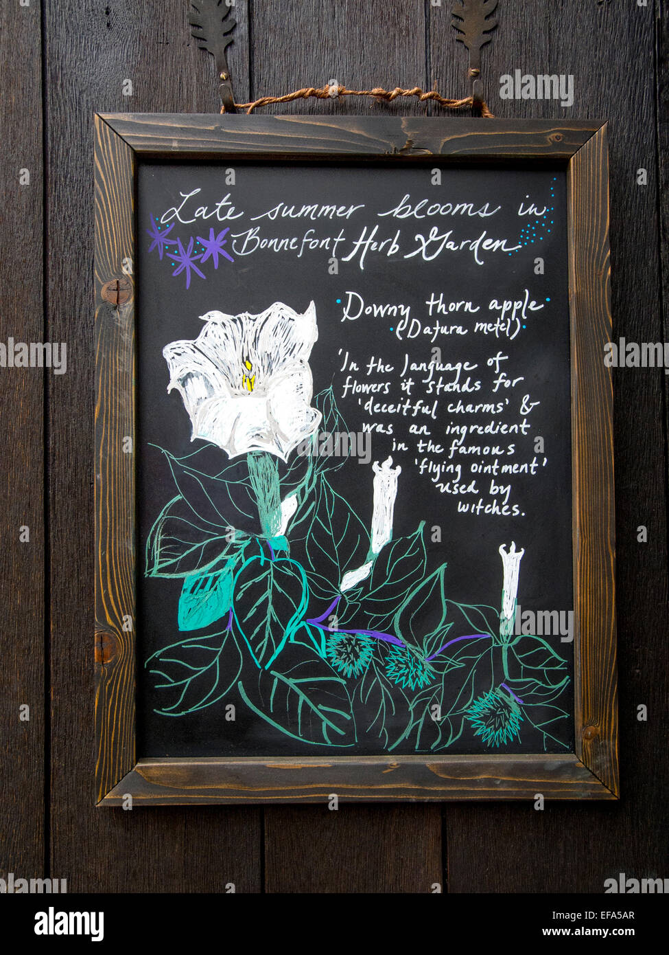 A blackboard description of the Down Thorn Apple plant in the Stock