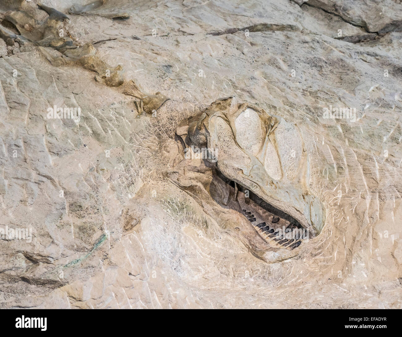 Covered findspot of dinosaur bones, Dinosaur National Monument, Jensen, Utah, United States - Stock Image