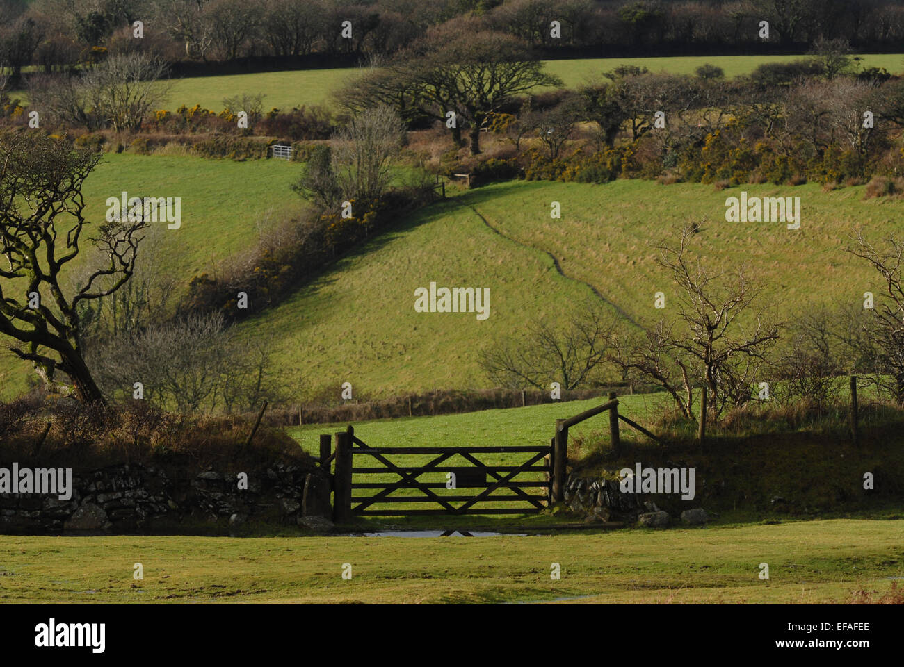 Winter view to a five bar gate and fields on the edge of Dartmoor National Park, Devon, England. - Stock Image