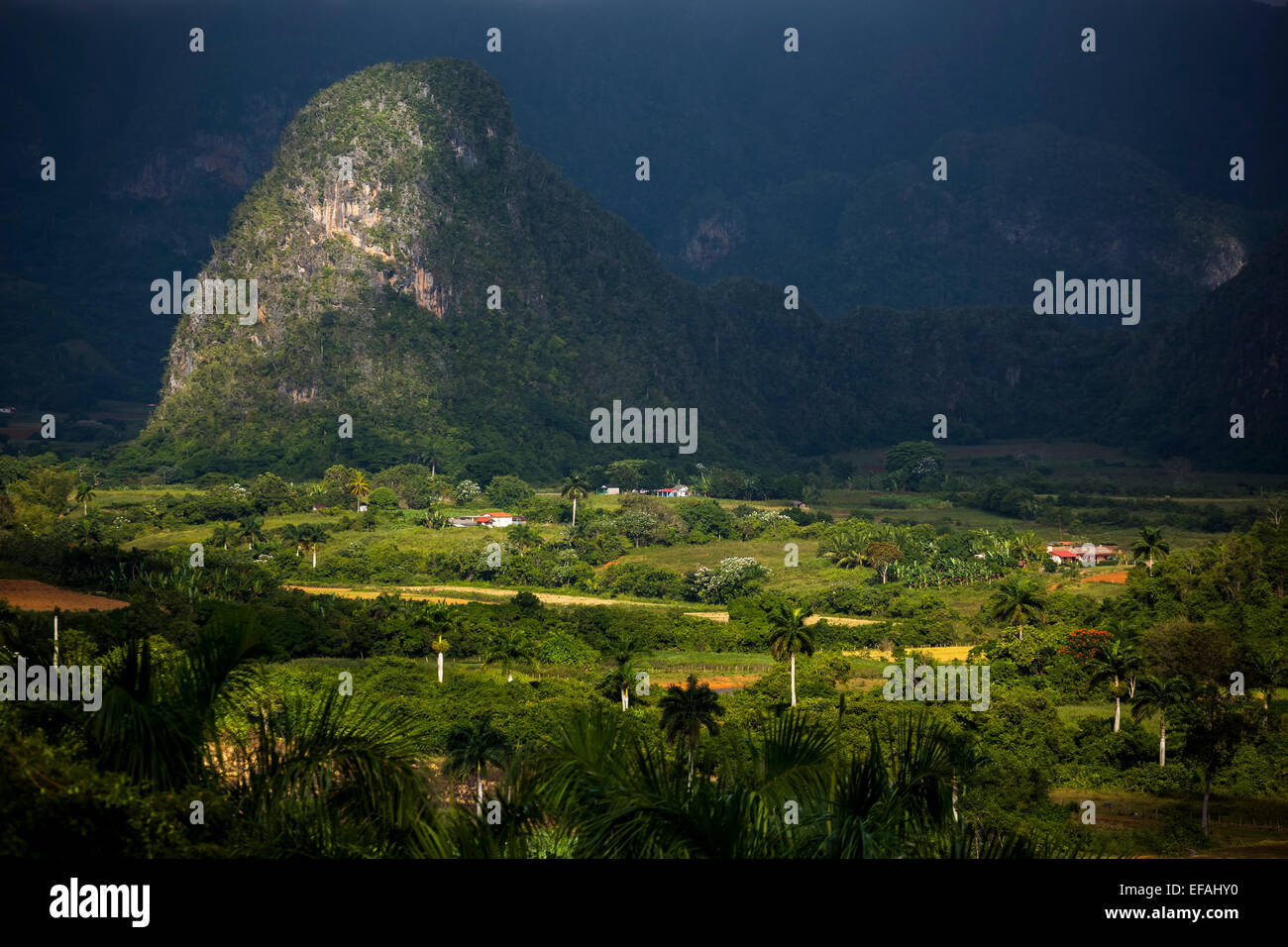 Tobacco fields and the Mogotes karst mountains, Valle de Viñales, Viñales, Pinar del Rio Province, Cuba - Stock Image