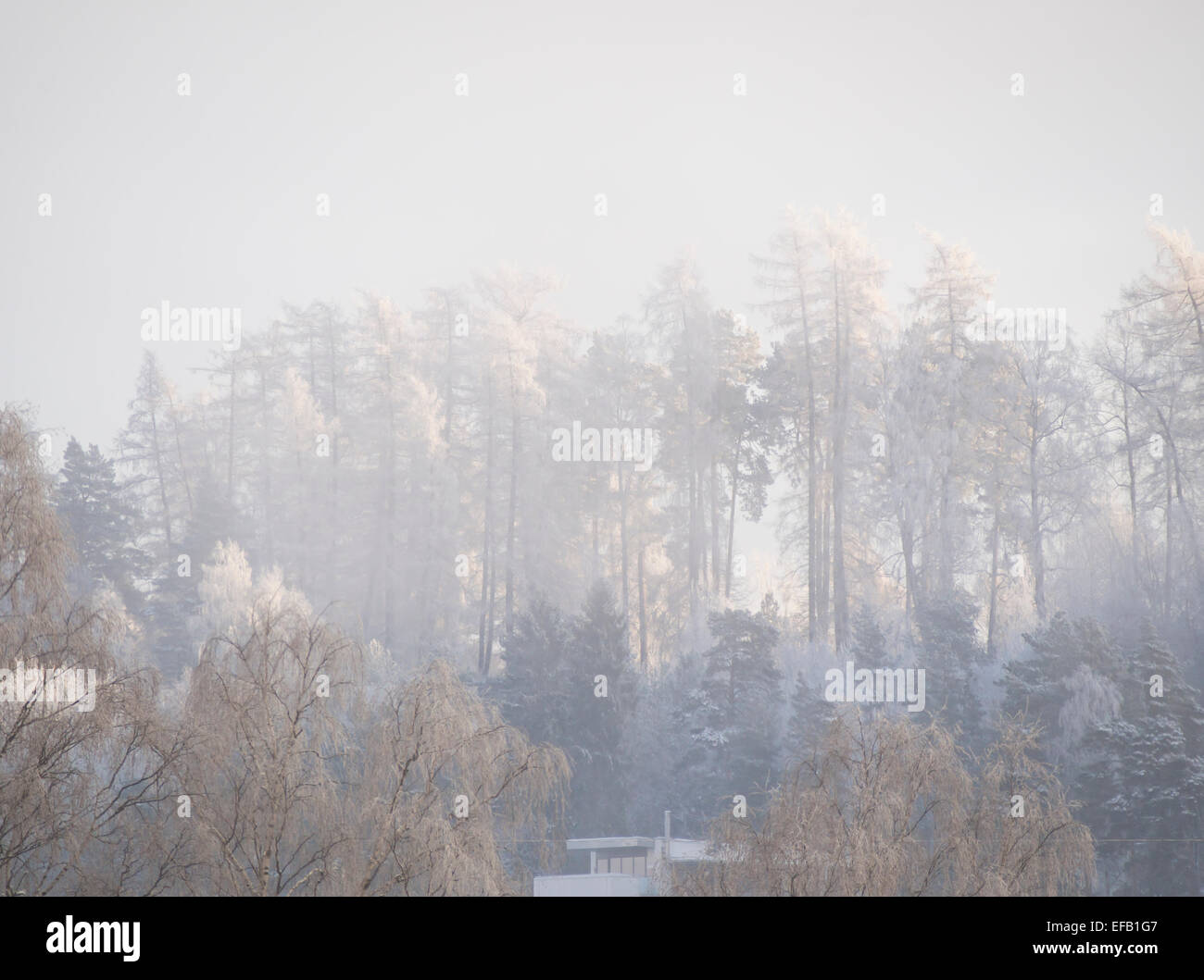 Winter in Oslo Norway, hilltop with frosty trees, snow and misty patches - Stock Image